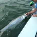 angler holding a giant tarpon beside boat
